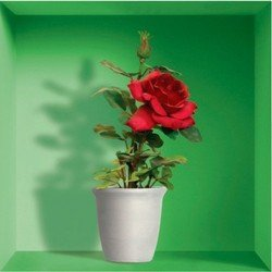 Наклейки 3D (NISHA-786) (красные цветы в вазе, горшке,  пакете, 3шт)